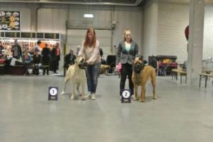hondenshow utrecht 1