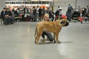 hondenshow utrecht