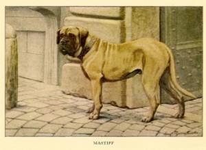 mastiff vroeger